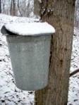 Classic sugaring bucket