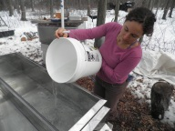 Filling boiler with collected sap