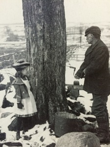 Picture of trees being tapping in Ithaca, from the History Center